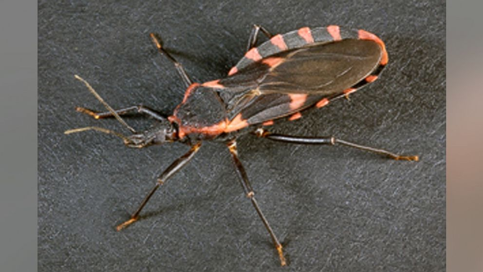 This insect's bite can lead to heart disease