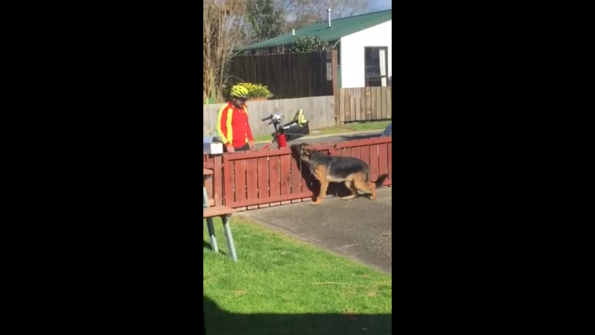 This dog and mailman have a beautiful and rare friendship – it's heartwarming!