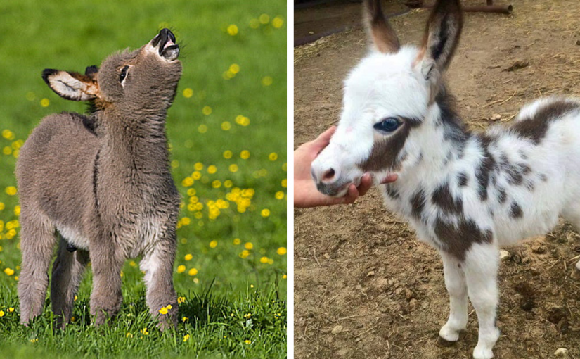 2-week-old donkey is nowhere to be seen. Then farmer finds his hilarious hiding place and can't stop laughing