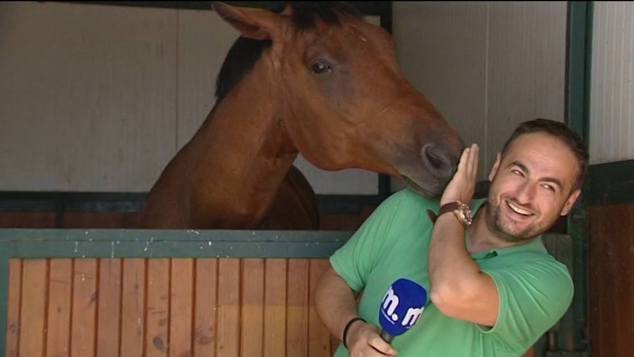 The horse loved the reporter so much, the film crew canceled the interview as they couldn't stop laughing