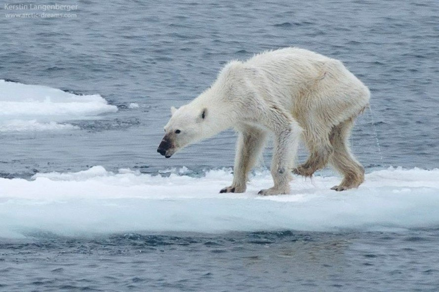 Trump administration predicts 7°F (4°C) global temperature rise by 2100 and hundred of species to go extinct