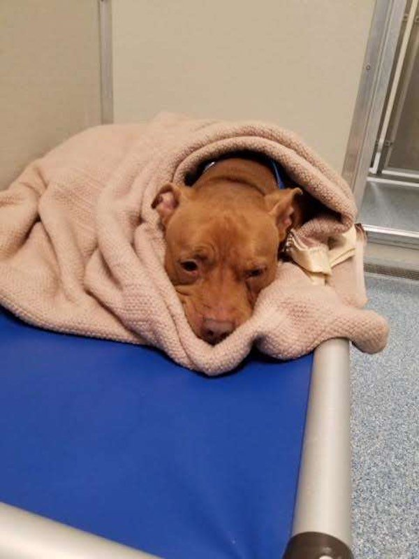 A scared shelter dog can't fall asleep until he's tucked in